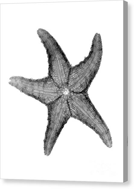 X-ray Of Starfish Canvas Print