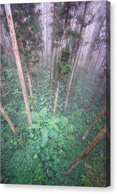 Xi Tou Canvas Print