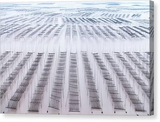Bamboo Canvas Print - Xiapu by Attila Balogh