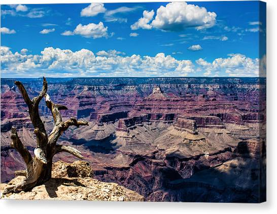 Yaki Point Color Canvas Print