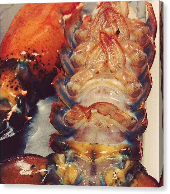 Lobster Canvas Print - Yeah This Is Just The Tail Of A Lobster by Jordan Scott