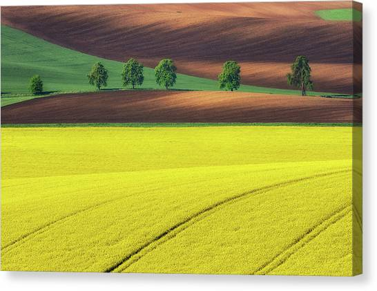 Yellow Canvas Print by Ales Komovec