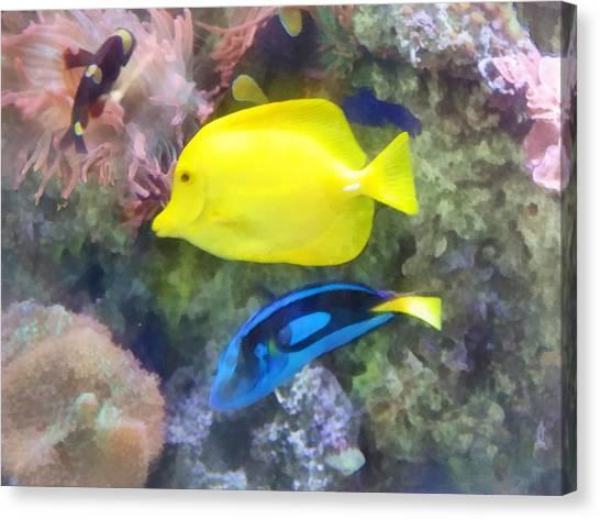 Yellow And Blue Tang Fish Canvas Print by Susan Savad