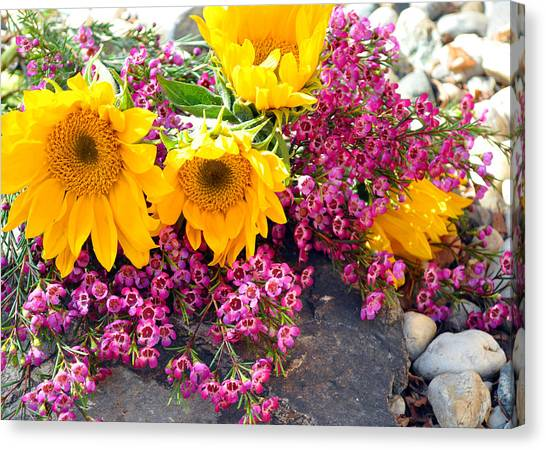 Yellow And Pink Canvas Print
