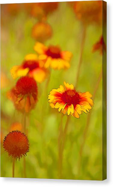 Indian Blanket Coneflower Canvas Print