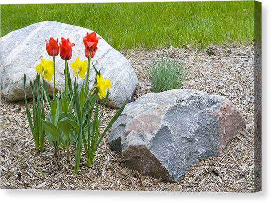 Yellow And Red Tulips With Two Rocks Canvas Print