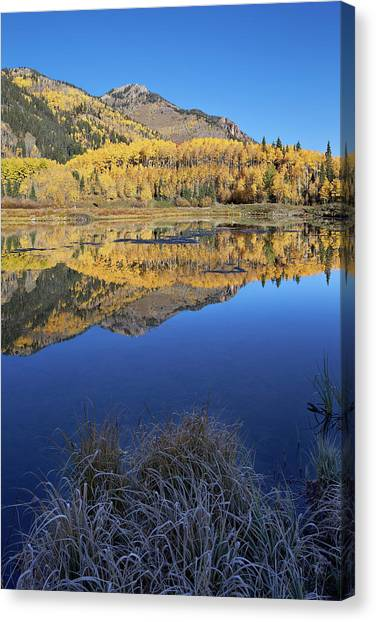 Yellow Aspen Trees Reflected In Priest Canvas Print