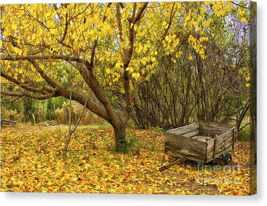 Yellow Autumn Leaves And Wooden Wagon Canvas Print