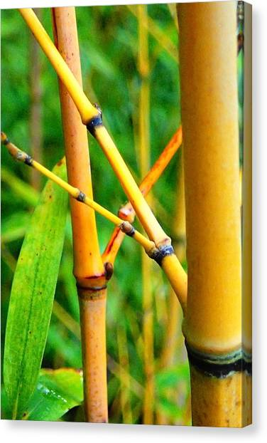 Bamboo Canvas Print - Yellow Bamboo by Laura OConnell