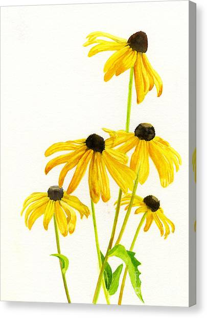 Susan Canvas Print - Yellow Black Eyed Susans by Sharon Freeman