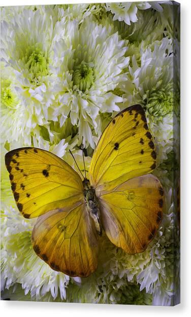 Pom-pom Canvas Print - Yellow Butterfly On Pom Poms by Garry Gay