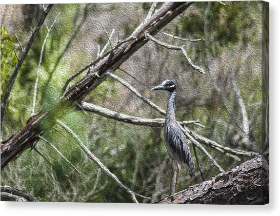 Yellow Crowned Night Heron Canvas Print by Frank Feliciano