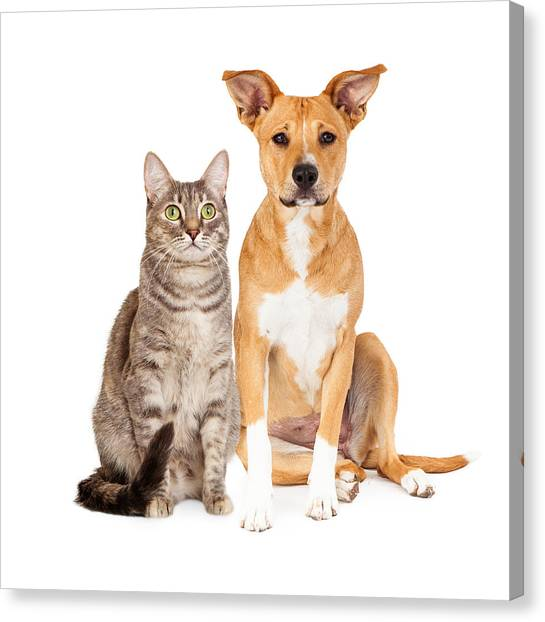 Yellow Dog And Tabby Cat Canvas Print