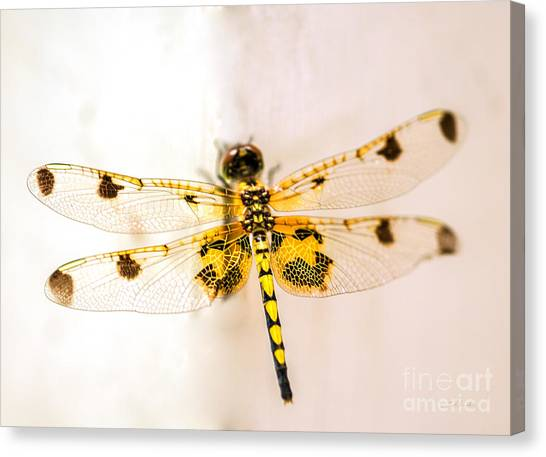 Dragon Fly Canvas Print - Yellow Dragonfly Pantala Flavescens by Iris Richardson
