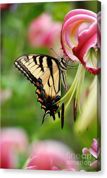 Yellow Eastern Swallowtail Butterfly Canvas Print