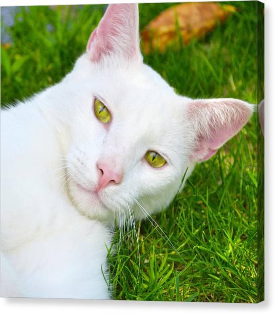 Yellow Eyes Canvas Print