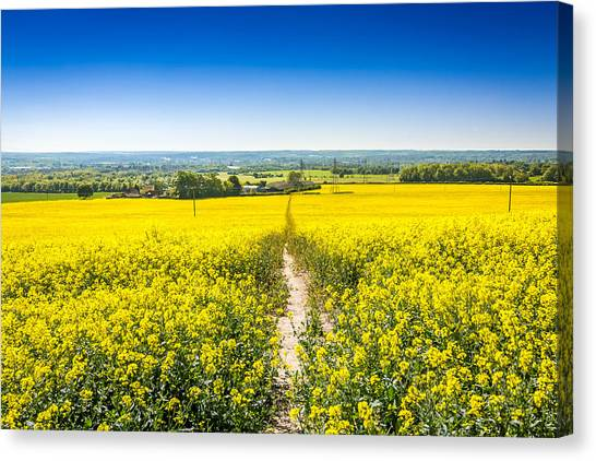 Canvas Print featuring the photograph Yellow Fields. by Gary Gillette