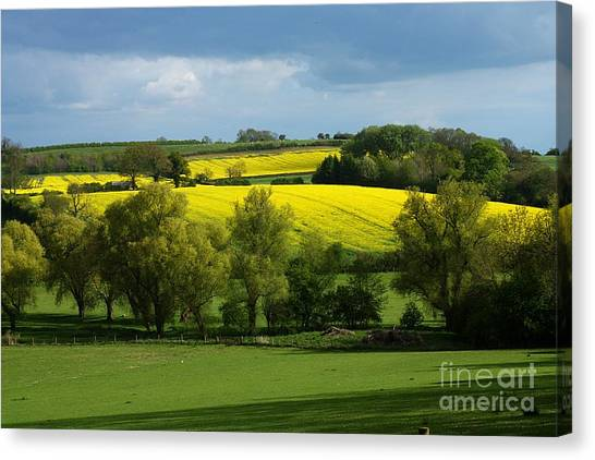Yellow Fields In The Sun Canvas Print