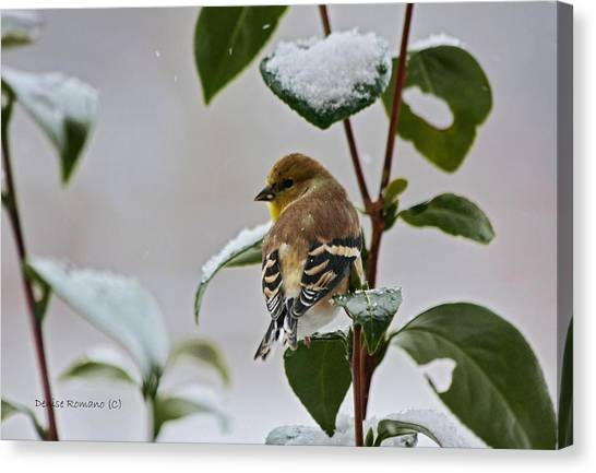 Goldfinch On Branch Canvas Print