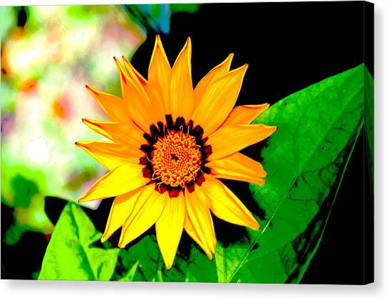 Yellow Flower Canvas Print by Carolyn Reinhart