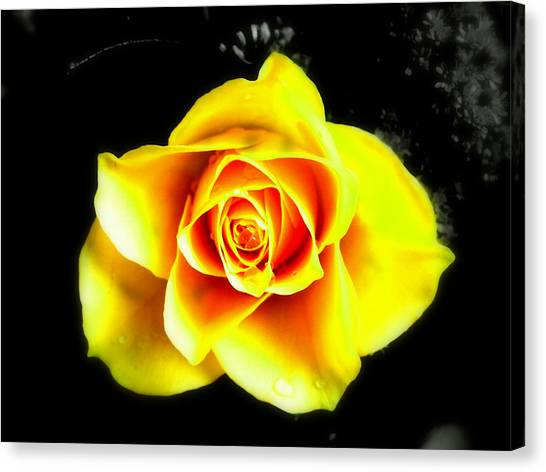 Yellow Flower On A Dark Background Canvas Print