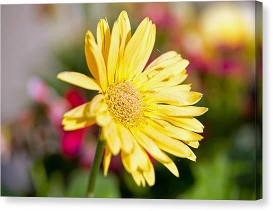 Yellow Flower Canvas Print