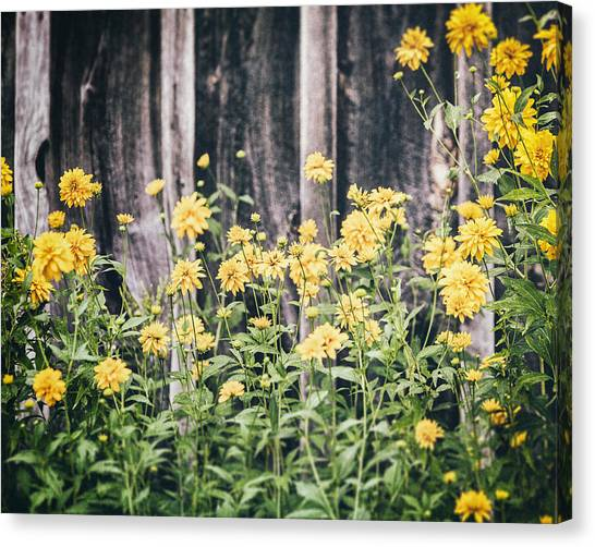 Honeydews Canvas Print - Yellow Flowers Against A Rustic Grey Barn by Lisa Russo