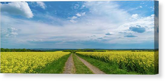 Yellow Flowers In A Field Canvas Print by Wladimir Bulgar/science Photo Library