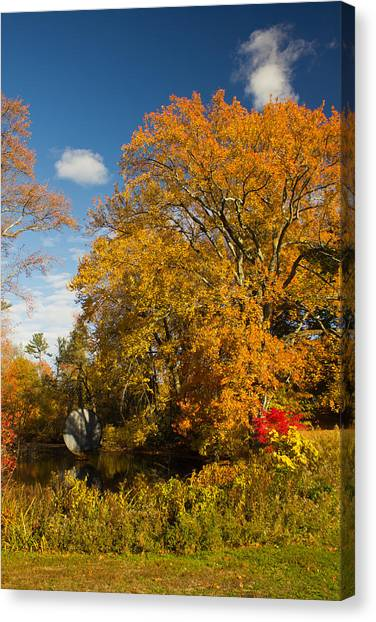 Yellow Giant Canvas Print