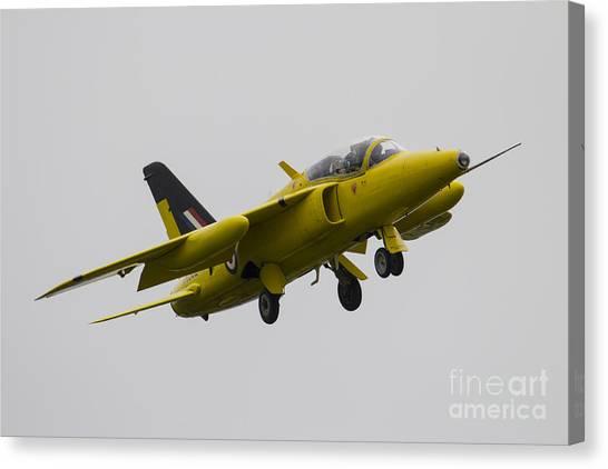 Gnats Canvas Print - Yellow Gnat by J Biggadike