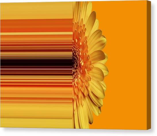 Yellow Gold Canvas Print
