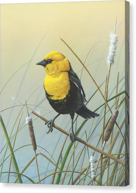 Yellow-headed Black Bird Canvas Print