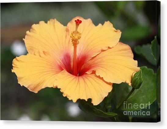 Yellow Hibiscus All Profits Go To Hospice Of The Calumet Area Canvas Print