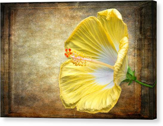 Canvas Print featuring the photograph Yellow Hibiscus by Garvin Hunter