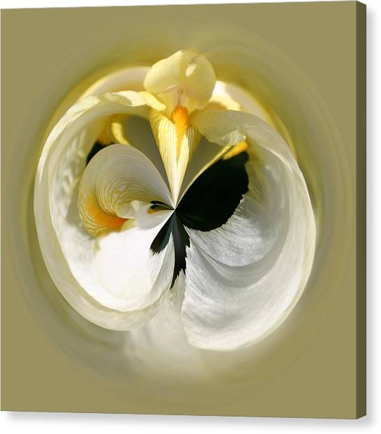 Yellow Iris 101 Canvas Print