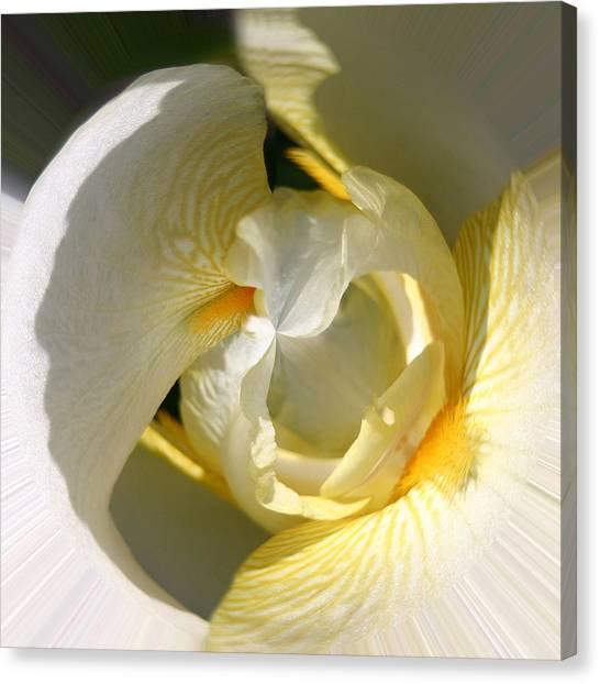 Yellow Iris 103 Canvas Print