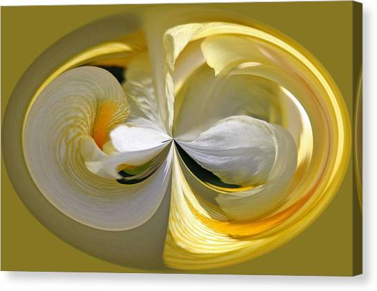 Yellow Iris Series 106 Canvas Print