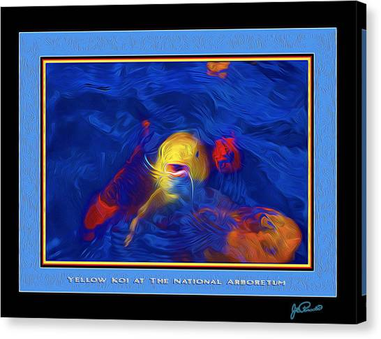 Yellow Koi At The National Arboretum Canvas Print