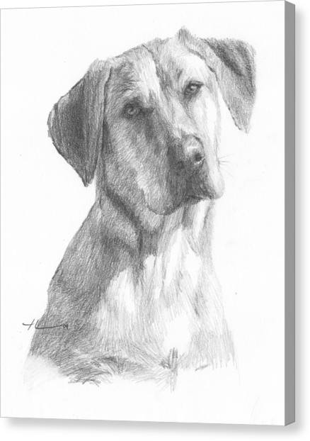 Yellow Lab Dog Pencil Portrait Canvas Print by Mike Theuer