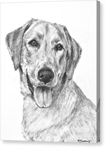 Yellow Lab Head And Shoulders Canvas Print