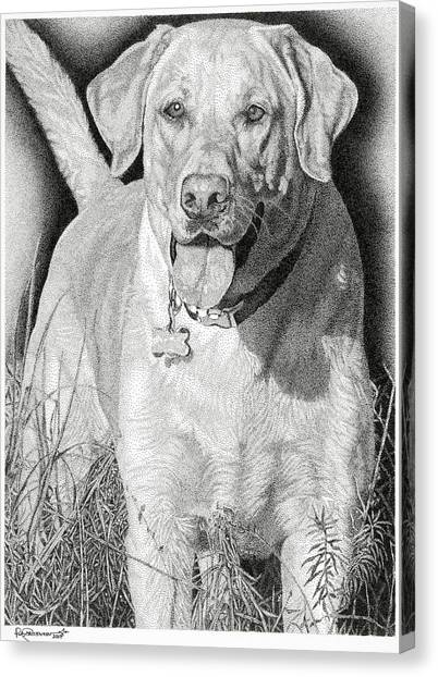 Yellow Lab In The Field Canvas Print by Rob Christensen