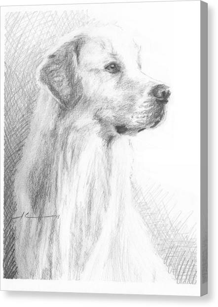 Yellow Labrador Show Dog Pencil Portrait Canvas Print by Mike Theuer