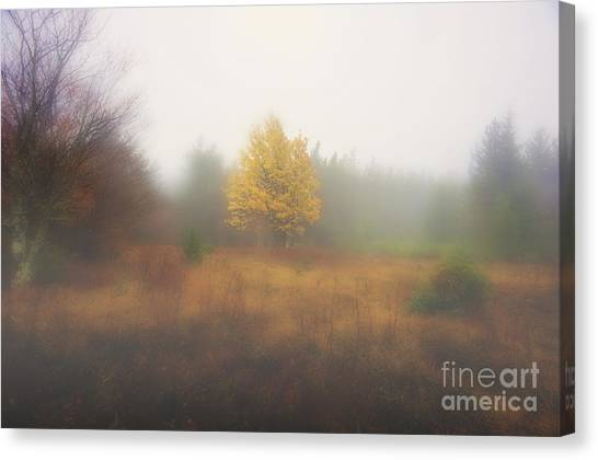 Yellow Leaves Of Tree In Fog At Dolly Sods Canvas Print by Dan Friend