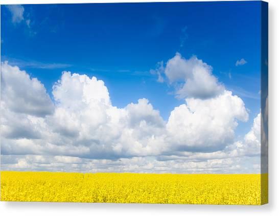 Yellow Mustard Fields Under A Deep Blue Sky Canvas Print