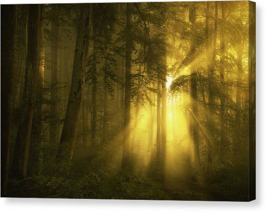 Foggy Forests Canvas Print - Yellow by Norbert Maier