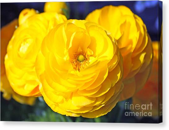Yellow Peonies Canvas Print