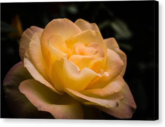 Yellow Ray Of Sunshine Canvas Print