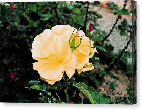 Yellow Rose And Bud Canvas Print by Christopher Bage