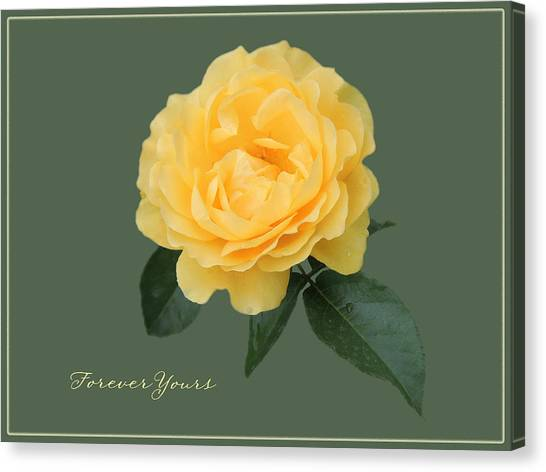 Yellow Rose Of Love Canvas Print