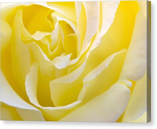 Rose Canvas Print - Yellow Rose by Svetlana Sewell